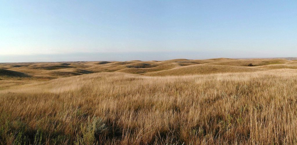 North Dakota Native Prairie