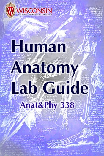 Cover image for Human Anatomy Lab Manual