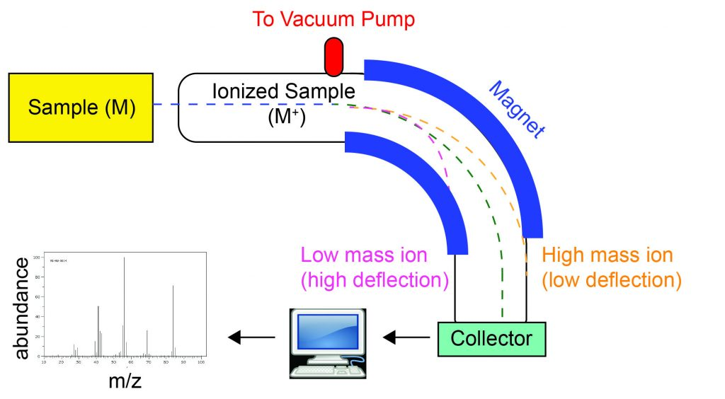"This diagram illustrates how a mass spectrometer works. A yellow box at the top left is labeled ""Sample (M)"". A blue dashed line indicating the path of the sample comes out of the sample box and enters into an elbow-shaped ionization chamber that curves downward and is attached to a vacuum pump. The first part of the path is labeled ""Ionized sample (M+)"" indicating that in this section the sample is ionized. The turn in the ionization chamber is lined with magnets on the inside and outside of the turn. The blue dashed line that entered the ionization chamber splits into three different colored dashed lines: a green dashed line continues to travel around the curve and hits a green box at the end of the ionization chamber labeled ""Collector"" approximately in the middle. A yellow dashed line labeled ""High mass ion (low deflection)"" is deflected around the curve and hits the outside wall of the ionization chamber. A pink dashed line labeled ""Low mass ion (high deflection)"" is deflected so that it hits the inside wall of the curve. The pink and yellow lines do not hit the collector. The collector is then connected to a computer that outputs a mass spectrum, which is a plot of abundance on the y-axis vs. m/z on the x-axis."