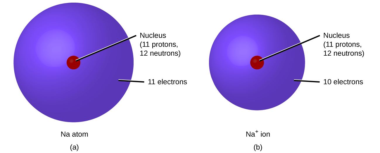Figure A shows a sodium atom, N a, which has a nucleus containing 11 protons and 12 neutrons. The atom's surrounding electron cloud contains 11 electrons. Figure B shows a sodium ion, N a superscript plus sign. Its nucleus contains 11 protons and 12 neutrons. The ion's electron cloud contains 10 electrons and is smaller than that of the sodium atom in figure A.