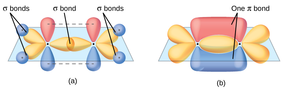 "Two diagrams are shown labeled, ""a"" and ""b."" Diagram a shows two carbon atoms with three purple balloon-like orbitals arranged in a plane around them and two red balloon-like orbitals arranged vertically and perpendicularly to the plane. There is an overlap of two of the purple orbitals in between the two carbon atoms, and the other four purple orbitals that face the outside of the molecule are shown interacting with spherical blue orbitals from four hydrogen atoms. Diagram b depicts a similar image to diagram a, but the red, vertical orbitals are interacting above and below the plane of the molecule to form two areas labeled, ""One pi bond."""