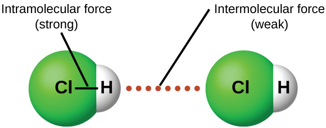 "An image is shown in which two molecules composed of a green sphere labeled ""C l"" connected on the right to a white sphere labeled ""H"" are near one another with a dotted line labeled ""Intermolecular force ( weak )"" drawn between them. A line connects the two spheres in each molecule and the line is labeled ""Intramolecular force ( strong )."""