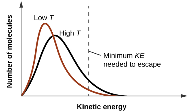 """A graph is shown where the y-axis is labeled """"Number of molecules"""" and the x-axis is labeled """"Kinetic Energy."""" Two lines are graphed and a vertical dotted line, labeled """"Minimum K E needed to escape,"""" is drawn halfway across the x-axis. The first line move sharply upward and has a high peak near the left side of the x-axis. It drops just as steeply and ends about 60 percent of the way across the x-axis. This line is labeled """"Low T."""" A second line, labeled """"High T,"""" begins at the same point as the first, but does not go to such a high point, is wider, and ends slightly further to the right on the x-axis."""