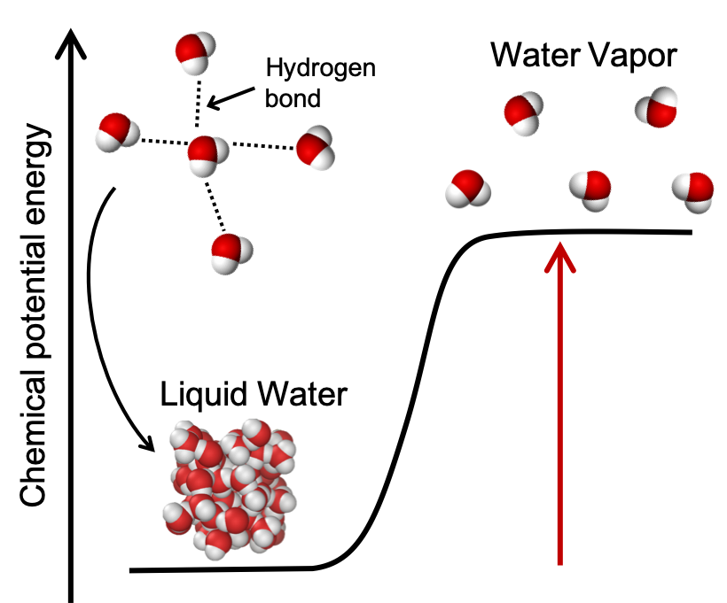 A plot of chemical potential energy vs reaction progress is shown for the reaction of liquid water being heated to water vapor. The chemical potential energy of liquid water is low and a picture shows the liquid water molecules close together. An inset shows the hydrogen bonding that occurs between the liquid water molecules. The chemical potential energy of water vapor is high and an image shows the water molecules spaced further apart than in the liquid form.