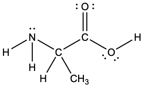 A Lewis structure depicts a nitrogen atom with two lone pairs of electrons that is single bonded to two hydrogen atoms and a carbon atom, which is, in turn, single bonded to a hydrogen atom, a methyl group and another carbon atom. This carbon atom is single bonded to an oxygen atom with two lone pairs of electrons and single bonded to an oxygen that has two lone pairs of electrons and a single bond to a hydrogen atom.