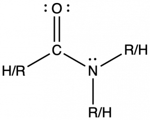 There is one structure with a central carbon atom single bonded to a R/H group to the left, double bonded to an oxygen (which has two lone pairs) and single bonded to a nitrogen to the right. The nitrogen has a lone pair as well as two single bonds to R/H groups.