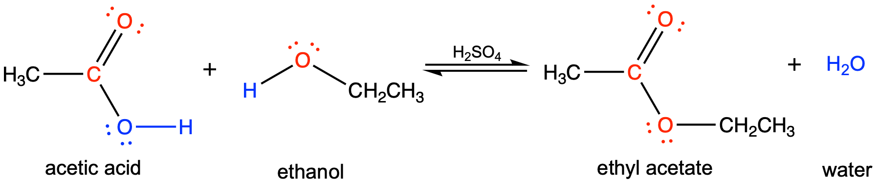 This figure has four structures, two reactants and two products. The first reactant has a central carbon attached to a C H 3 group to the left, a double bonded oxygen (with two lone pairs) to the top, and a single bond to oxygen to the right, which has two lone pairs and is single bonded to a hydrogen. Underneath is written acetic acid. The second structure has a central oxygen has two lone pairs with a single bond to hydrogen to the left and a C H 2 C H 3 group to the right. Underneath is written ethanol. Then there are equilibrium arrows with H 2 S O 4 written above it. The first product has a central carbon with a single bond to a C H 3 group, a double bond to oxygen (which has two lone pairs) and a single bond to an oxygen, which has two lone pairs which is single bonded to a C H 2 C H 3 group. Underneath is written ethyl acetate. The second product is H 2 O, underneath is written water.