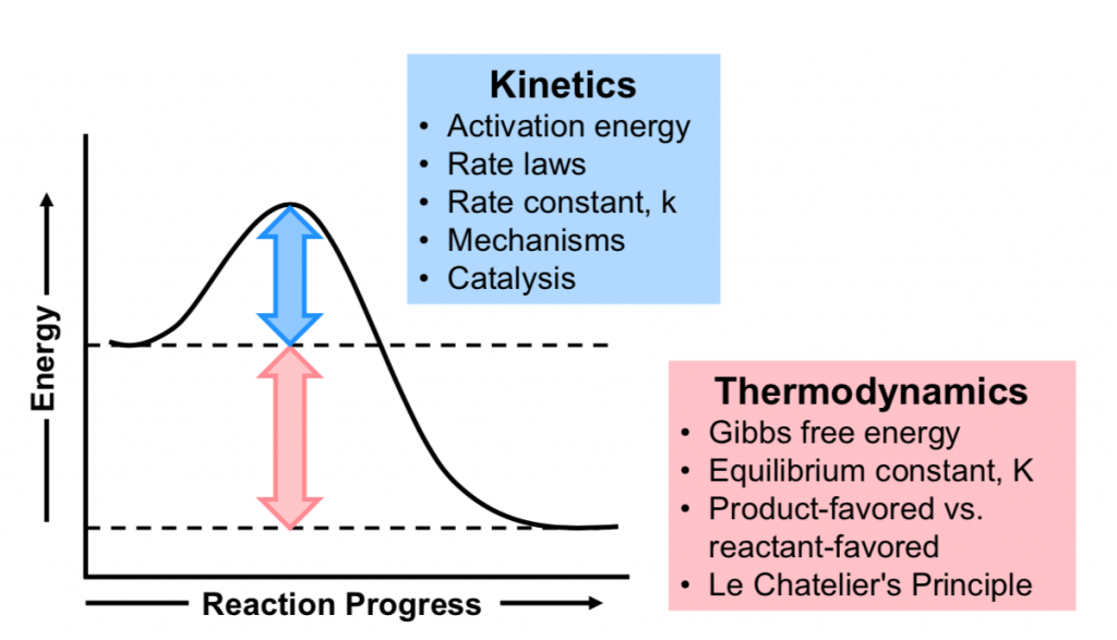 "A reaction is shown with a graph below. The reaction has reactants ""A"" with equilibrium arrows to products ""B"". Above the equilibrium arrows is ""Stability, K"". The graph is shown with the label, ""Reaction coordinate,"" on the x-axis and the label, ""Free Energy,"" on the y-axis. Approximately half-way up the y-axis, a short portion of a red concave down curve which has a horizontal line extended from it across the graph. There is a horizontal black dashed line connecting the start of the red curve to the y-axis. The left end of this line is labeled ""reactants A"" The red concave down curve extends upward to reach a maximum near the height of the y-axis. There is a horizontal black dashed line connecting the maxiumum of this curve to the y-axis. A double-sided arrow connects these two black dashed lines and is labeled ""activation energy (E subscript A) kinetics. From the peak, the curve continues downward to a second horizontally flattened region well below the origin of the curve near the x-axis. This flattened region is labeled ""products B."" A third horizontal black dashed line connects the end of the red curve to the y-axis. A second double sided arrow is drawn between the two horizontal black dashed lines representing the start and end of the curve and is labeled, ""free energy change (delta G) thermodynamics."""