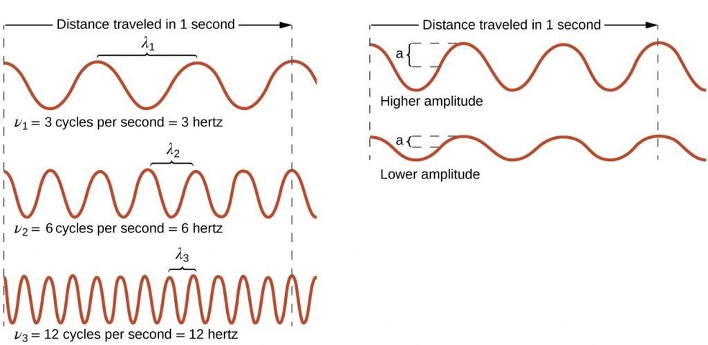 """This figure has two parts. On the left side, we see the relationship between wavelength and frequency. Two vertical dotted lines are drawn and the distance between them is labeled """"Distance traveled in 1 second"""". Below this label are three waves. The top wave completes 3 cycles between the two vertical dotted lines and is labeled as """"nu 1 equals 3 cycles per second equals 3 hertz"""". The wavelength of this wave is labeled as lambda 1. The middle wave completes 6 cycles between the two vertical dotted lines and is labeled as """"nu 2 equals 6 cycles per second equals 6 hertz"""". The wavelength of this wave is labeled as lambda 2. The bottom wave completes 12 cycles between the two vertical dotted lines and is labeled as """"nu 3 equals 12 cycles per seconds equals 12 hertz"""". The wavelength of this wave is labeled as lambda 3. The second part of the figure has two vertical dotted lines and the distance between them is labeled """"Distance traveled in 1 second"""". Below this are two waves. The top wave is labeled as """"High amplitude"""" and has a high amplitude. The bottom wave is labeled as """"low amplitude"""" and has a low amplitude. These two waves complete the same number of cycles in 1 second and therefore have the same frequency, even if their amplitudes are different."""