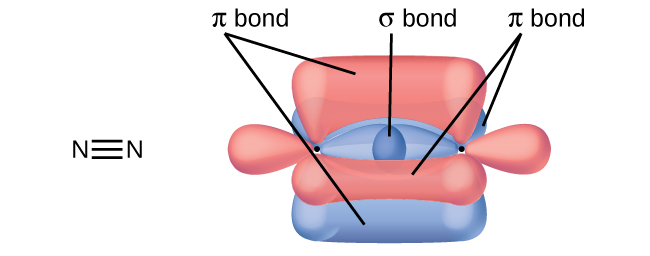 "Two nitrogen atoms are shown both in a Lewis structure and as a diagram. The Lewis structure depicts the two nitrogen atoms bonded by a triple bond. The diagram shows two nitrogen atoms and their three peanut-shaped p-orbitals. One of the orbitals lies horizontally and overlaps between the two nuclei. It is labeled, ""sigma bond."" The other two lie vertically and in the z-plane of the page. They overlap above and below and into and out of the page in relation to the nuclei. They are each labeled, ""pi bond."""