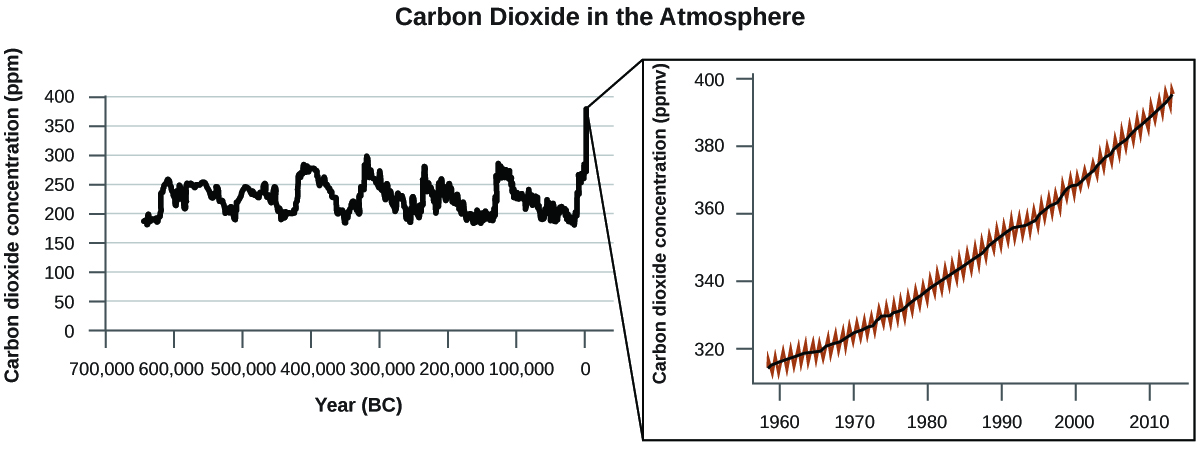 "This figure has the heading ""Carbon Dioxide in the Atmosphere."" The first graph has a horizontal axis label ""Year ( B C )"" and a vertical axis label ""Carbon dioxide concentration ( p p m )."" The horizontal axis labels begin at 700,000 on the left and increases by multiples of 100,000 up to 0 on the right. The vertical axis begins at 0 and increases by multiples of 50 extending up to 400. A jagged, cyclical pattern is shown that begins before 600,000 B C at under 200 p p m. Up to 0 B C values appear to vary cyclically up to a high of about 300 p p m. Extending beyond 0 B C to the right, the carbon dioxide concentration appears to be on a steady increase, having reached nearly 400 p p m in recent years. The second graph is shown to magnify the portion of the graph that is most recent. This graph begins just before the year 1960 and includes markings for multiples of 10 up to the year 2010. The vertical axis begins just below 320 p p m and includes markings for all multiples of 20 up to 400 p p m. A smooth black line is shown extending through a jagged red data pattern. The trend is a steady, nearly linear increase from the lower left to the upper right on the graph."