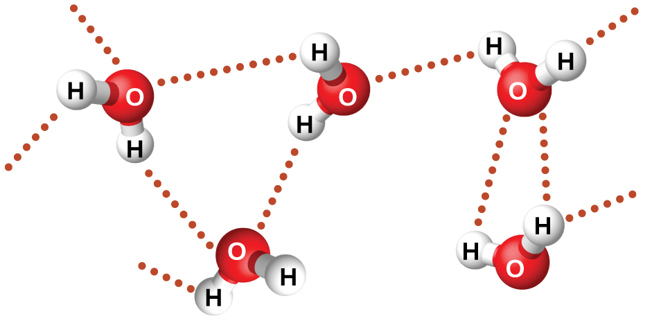 Five water molecules are shown near one another, but not touching. A dotted line lies between many of the hydrogen atoms on one molecule and the oxygen atom on another molecule.