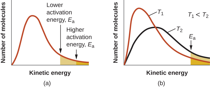 """Two graphs are shown each with an x-axis label of """"Kinetic energy"""" and a y-axis label of """"Fraction of molecules."""" Each contains a positively skewed curve indicated in red that begins at the origin and approaches the x-axis at the right side of the graph. In a, a small area under the far right end of the curve is shaded orange. An arrow points down from above the curve to the left end of this region where the shading begins. This arrow is labeled, """"Higher activation energy, E subscript a."""" In b, the same red curve appears, and a second curve is drawn in black. It is also positively skewed, but reaches a lower maximum value and takes on a broadened appearance as compared to the curve in red. In this graph, the red curve is labeled, """"T subscript 1"""" and the black curve is labeled, """"T subscript 2."""" In the open space at the upper right on the graph is the label, """"T subscript 1 less than T subscript 2."""" As with the first graph, the region under the curves at the far right is shaded orange and a downward arrow labeled """"E subscript a"""" points to the left end of this shaded region."""