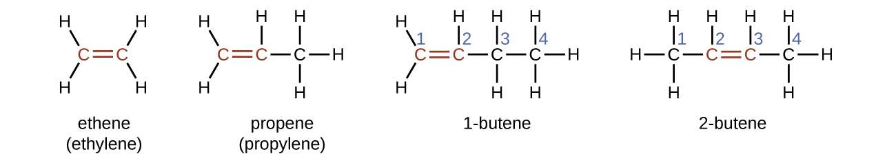 Four structural formulas and names are shown. The first shows two red C atoms connected by a red double bond illustrated with two parallel line segments. H atoms are bonded above and below to the left of the left-most C atom. Two more H atoms are similarly bonded to the right of the C atom on the right. Beneath this structure the name ethene and alternate name ethylene are shown. The second shows three C atoms bonded together with a red double bond between the red first and second C atoms moving left to right across the three-carbon chain. H atoms are bonded above and below to the left of the C atom to the left. A single H is bonded above the middle C atom. Three more H atoms are bonded above, below, and to the right of the third C atom. Beneath this structure the name propene and alternate name propylene is shown. The third shows four C atoms bonded together, numbered one through four moving left to right with a red double bond between the red first and second carbon in the chain. H atoms are bonded above and below to the left of the C atom to the left. A single H is bonded above the second C atom. H atoms are bonded above and below the third C atom. Three more H atoms are bonded above, below, and to the right of the fourth C atom. Beneath this structure the name 1 dash butene is shown. The fourth shows four C atoms bonded together, numbered one through four moving left to right with a red double bond between the red second and third C atoms in the chain. H atoms are bonded above, below, and to the left of the left-most C atom. A single H atom is bonded above the second C atom. A single H atom is bonded above the third C atom. Three more H atoms are bonded above, below, and to the right of the fourth C atom. Beneath this structure the name 2 dash butene is shown.