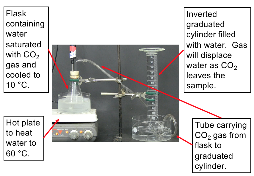 On the left side, an Erlenmeyer flask containing water saturated with CO2 gas is in an ice bath to cool the solution to 10 degrees celsius. The ice bath is set on a hot plate to warm the water during the experiment. On the right side of the image, a graduated cylinder is filled with water and inverted in a water bath. A stopper on the Erlenmeyer flask from the left side has a tube that carries the released CO2 gas from the flask to a graduated cylinder on the right side of the image. As gas enters the inverted graduated cylinder, it will displace the water and the amount of CO2 released from the water and CO2 solution in the Erlenmeyer flask will be measured.
