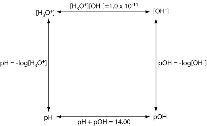 """This figure is a square with four double-headed arrows pointing between the four corners along the edges. The top left corner is labeled [H 3 O +]. The arrow moving left is labeled """"[H 3 O +] [O H -] = 1.0 times 10 ^ -14"""". The top right corner is labeled [O H -]. The arrow pointing down is labeled """"p O H = - log [O H -]."""" The bottom right corner is labeled p O H. The arrow pointing left is labeled """"p H + p O H = 14.00"""". The bottom left corner is labeled p H. The arrow pointing up is labeled """"p H = - log [ H 3 O +]""""."""