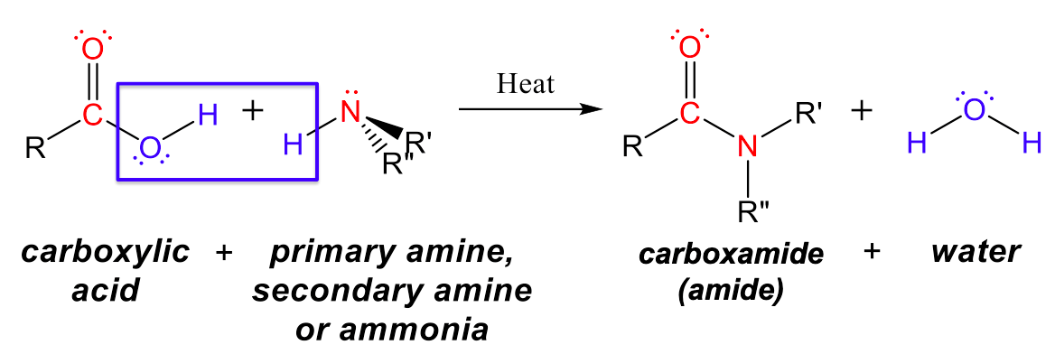 """This figure has four structures, two reactants and two products. The first reactant has a central carbon with a single bond to a R group to the left, a double bond to oxygen (which has two lone pairs) to the top, and a single bond to oxygen to the right, which has two lone pairs and a single bond to hydrogen. Underneath is written carboxylic acid. The second structure has a central nitrogen with a lone pair, a single bond to hydrogen, and two single bonds to a R' and a R"""" group, one of which is a dash and one of which is a wedge. Underneath is written """"primary amine, secondary amine, or ammonia"""". There is a single headed arrow pointing towards products with """"Heat"""" written above it. The first product has a central carbon with a single bond to a R group to the left, a double bond to oxygen to the top (which has two lone pairs), a single bond to nitrogen with a lone pair and two single bonds, one to R' and another to R"""". Underneath is written carboxamide (amide). The second product has a central oxygen with two lone pairs and two single bonds to hydrogen. Underneath is written water."""