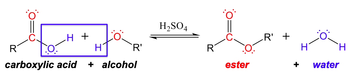 This figure is a condensation reaction, with two reactants and two products. In the reactants, there is a central carbon with a R group to left, double bonded oxygen (with two lone pairs) to the top, and a single bond to oxygen to the right, which has two lone pairs and a single bond to hydrogen. Underneath is carboxylic acid. This structure is added to a central oxygen with two lone pairs, a single bond to hydrogen to the left, and a single bond to R' group to the right. Underneath is written alcohol. There is a blue box around the single bonded oxygen and hydrogen of the carboxylic acid and the hydrogen of the alcohol. Then there are equilibrium arrows with H 2 S O 4 above the arrow. In the products, there is a central carbon with a single bond to a R group to the left, a double bond to oxygen (with two lone pairs) to the top, and a single bond to oxygen to the right, which has two lone pairs and a single bond to a R' group. The second structure is water, a central oxygen with two lone pairs and two single bonds to hydrogen, one to the left and one to the right. Under the first structure is written ester and the under the second is written water.