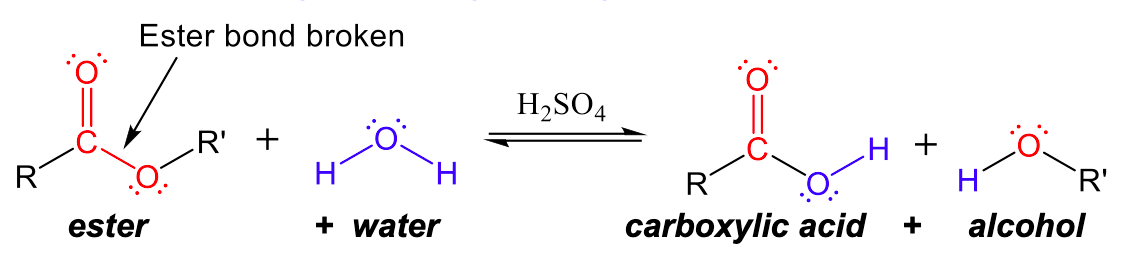 """This figure has four structures, two reactants and two products. The first reactant has a central carbon with an R group to the left and a double bonded oxygen (with two lone pairs) to the top and a single bond to oxygen to the right, which has two lone pairs and a single bond to a R' group. There is an arrow pointing to the bond between the central carbon and single bonded oxygen which says """"Ester bond broken"""". Underneath is written ester. The second structure has a central oxygen with two lone pairs and two single bonds to hydrogen. Underneath is written hydrogen. Then there are equilibrium arrows with H 2 S O 4 written above it. The first product has a central carbon with a single bond to a R group, a double bond to an oxygen (which has two lone pairs) and a single bond to oxygen, which has two lone pairs and a single bond to hydrogen. Underneath is written carboxylic acid. The second product has a central oxygen with two lone pairs, a single bond to hydrogen to the left and a single bond to an R' group to the right. Underneath is written alcohol."""