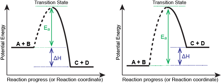 """A graph is shown with the label, """"Extent of reaction,"""" bon the x-axis and the label, """"Potential energy,"""" on the y-axis. Above the x-axis, a portion of a dashed curve is labeled """"A plus B."""" From the right end of this region, the concave down curve continues upward to reach a maximum near the height of the y-axis. The peak of this curve is labeled, """"Transition state."""" A double sided arrow extends from a dashed horizontal line that originates at the y-axis at a common endpoint with the curve to the peak of the curve. This arrow is labeled """"E subscript a."""" A second horizontal dashed line segment is drawn from the right end of the black curve left to the vertical axis at a level significantly lower than the initial """"A plus B"""" labeled end of the curve. The end of the curve that is shared with this segment is labeled, """"C plus D."""" The curve, which was initially dashed, continues as a solid curve from the maximum to its endpoint at the right side of the diagram. A second double sided arrow is shown. This arrow extends between the two dashed horizontal lines and is labeled, """"capital delta H."""""""