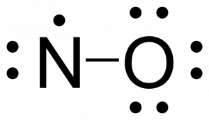 Rough Lewis structure for NO. Nitrogen is singly bonded to the oxygen atom. Oxygen has three lone pairs. Nitrogen has one lone pair and one free radical electron.