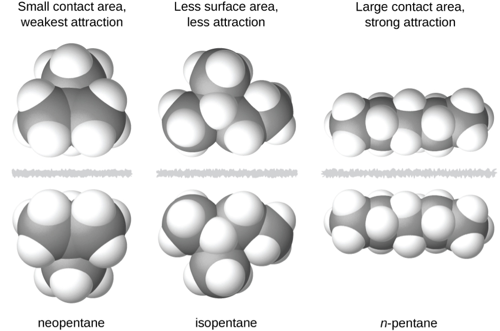 "Three images of molecules are shown. The first shows a cluster of large, gray spheres each bonded together and to several smaller, white spheres. There is a gray, jagged line and then the mirror image of the first cluster of spheres is shown. Above these two clusters is the label, ""Small contact area, weakest attraction,"" and below is the label, ""neopentane"" The second shows a chain of three gray spheres bonded by the middle sphere to a fourth gray sphere. Each gray sphere is bonded to several smaller, white spheres. There is a jagged, gray line and then the mirror image of the first chain appears. Above these two chains is the label, ""Less surface area, less attraction,"" and below is the label, ""isopentane"" The third image shows a chain of five gray spheres bonded together and to several smaller, white spheres. There is a jagged gray line and then the mirror image of the first chain appears. Above these chains is the label, ""Large contact area, strong attraction,"" and below is the label, ""n-pentane"""