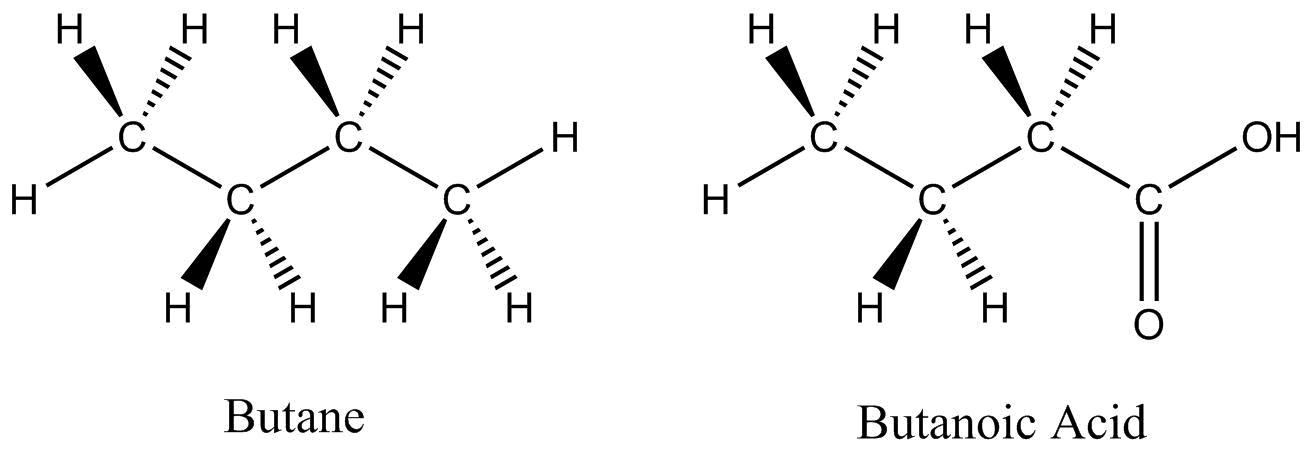 Two dash wedges structures are shown: the structure on the left is butane and the structure on the right in butanoic acid. The molecules have straight line to indicate bonds within a plane and uses wedges to show bond coming out of the plan toward the view and uses dashed lines to show bonds going out of the plane away from the viewer.