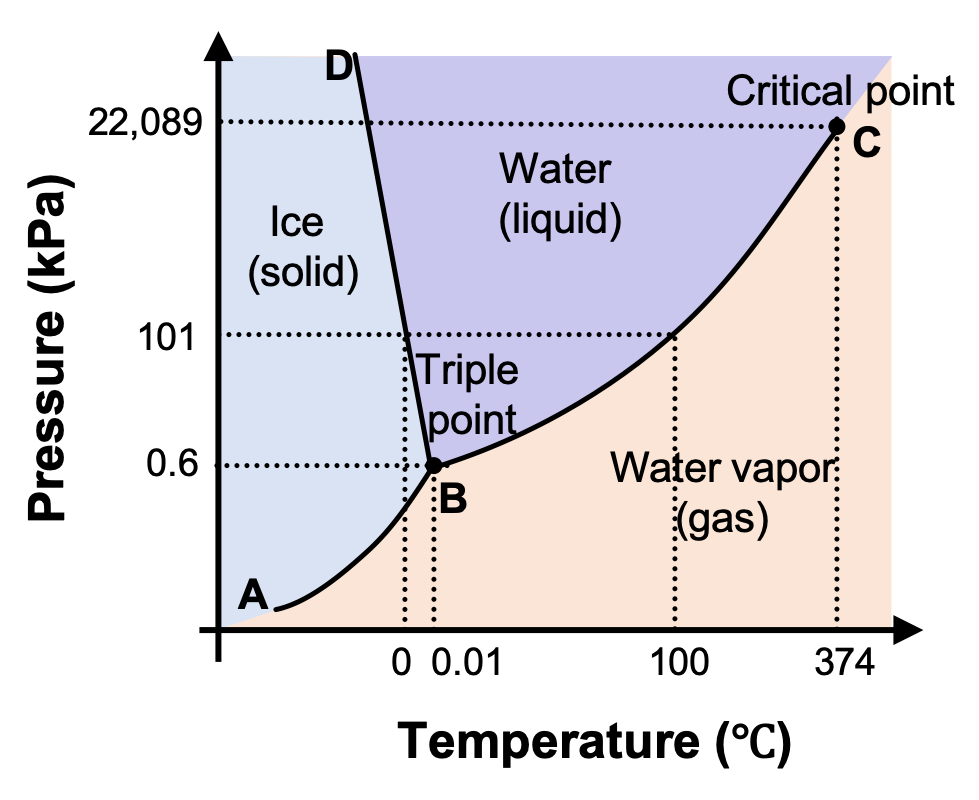"A graph is shown where the x-axis is labeled ""Temperature in degrees Celsius"" and the y-axis is labeled ""Pressure ( k P a )."" A line extends from the origin of the graph which is labeled ""A"" sharply upward to a point in the bottom third of the diagram labeled ""B"" where it branches into a line that slants slightly backward until it hits the highest point on the y-axis labeled ""D"" and a second line that extends to the upper right corner of the graph labeled ""C"". C is labeled ""Critical point, with a dotted line extending downward to the x-axis labeled 374 degrees Celsius, and another dotted line extending to the y-axis labeled 22,089 k P a. The two lines bisect the graph area to create three sections, labeled ""Ice (solid)"" near the middle left, ""Water (liquid)"" in the top middle and ""Water vapor (gas)"" near the bottom middle. Point B is labeled ""Triple point"" and has a dotted line extending downward to the x-axis labeled 0.01, and another dotted line extending to the y-axis labeled 0.6. Halfway between points B and C a dotted line extends from the originally discussed line downward to the point 100 degrees Celsius on the x-axis, and another dotted line extends to the y-axis at 101 k P a. Another dotted line extends from this dotted line downward at 0 degrees Celsius."