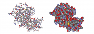 Ball-and-stick (left) and spacefilling (right) models of lysozyme, an enzyme. Both models show a large globular protein with and indentation (cleft) in the middle of the right-hand side.