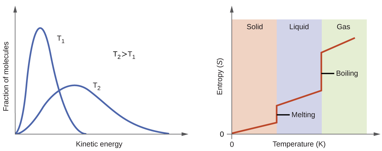 """Two graphs are shown. The y-axis of the left graph is labeled, """"Fraction of molecules,"""" while the x-axis is labeled, """"Velocity, v ( m / s ),"""" and has values of 0 through 1,500 along the axis with increments of 500. Four lines are plotted on this graph. The first, labeled, """"100 K,"""" peaks around 200 m / s while the second, labeled, """"200 K,"""" peaks near 300 m / s and is slightly lower on the y-axis than the first. The third line, labeled, """"500 K,"""" peaks around 550 m / s and is lower than the first two on the y-axis. The fourth line, labeled, """"1000 K,"""" peaks around 750 m / s and is the lowest of the four on the y-axis. Each line get increasingly broad. The second graph has a y-axis labeled, """"Entropy, S,"""" with an upward-facing arrow and an x-axis labeled, """"Temperature ( K ),"""" and a right-facing arrow. The graph has three equally spaced columns in the background, labeled, """"Solid,"""" """"Liquid,"""" and, """"Gas,"""" from left to right. A line extends slightly upward through the first column in a slight upward direction, then goes straight up in the transition between the first two columns. In then progresses in a slight upward direction through the second column, then goes up dramatically between the second and third columns, then continues in a slight upward direction once more. The first vertical region of this line is labeled, """"Melting,"""" and the second is labeled, """"Boiling."""""""