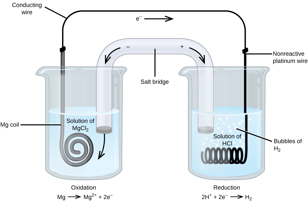 """This figure contains a diagram of an electrochemical cell. Two beakers are shown. Each is just over half full. The beaker on the left contains a colorless solution and is labeled """"Solution of M g C l subscript 2."""" The beaker on the right contains a colorless solution and is labeled """"Solution of H C l."""" A glass tube in the shape of an inverted U connects the two beakers at the center of the diagram. The tube contents are colorless. The ends of the tubes are beneath the surface of the solutions in the beakers and a small grey plug is present at each end of the tube. At the center of the diagram, the tube is labeled """"Salt bridge. Each beaker shows a metal coils submerged in the liquid. The beaker on the left has a thin grey coiled strip that is labeled """"M g coil."""" The beaker on the right has a black wire that is oriented horizontally and coiled up in a spring-like appearance that is labeled """"Non reactive platinum wire."""" A wire extends across the top of the diagram that connects the ends of the M g strip and platinum wire just above the opening of each beaker. This wire is labeled """"Conducting wire."""" At the center of this wire above the two beakers near the center of the diagram is a right pointing arrow with the label """"e superscript negative"""" at its base. Bubbles appear to be rising from the coiled platinum wire in the beaker. These bubbles are labeled """"Bubbles of H subscript 2."""" An arrow points down and to the right from a plus sign at the upper right region of the salt bride. An arrow points down and to the left from a negative sign at the upper left region of the salt bride. A curved arrow extends from the grey plug at the left end of the salt bridge into the surrounding solution in the left beaker. The label """"Oxidation M g right pointing arrow M g superscript 2 plus plus 2 e superscript negative"""" appears beneath the left beaker. The label """"Reduction 2 H superscript plus plus 2 e superscript negative right pointing arrow H subscript 2"""" appears beneath the right beake"""