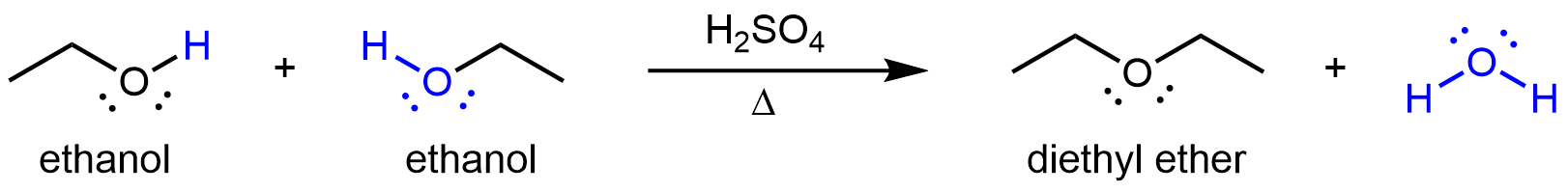 "This figure shows a reaction. The first molecule, which is labeled, ""ethanol,"" is a two C atom chain with the second C atom is bonded to a OH group. The H in the OH group is highlighted blue. There is a plus sign. The next molecule, which is labeled, ""ethanol,"" is also a two C atom chain with the second C atom is bonded to a OH group. The OH group is highlighted in blue. To the right of the second molecule there is an arrow labeled H subscript 2 S O subscript 4 above and Greek capital delta below. The resulting molecules is labeled, ""diethyl ether."" It has two ethyl groups on either side of O atom. There is a plus sign and a blue water molecule."