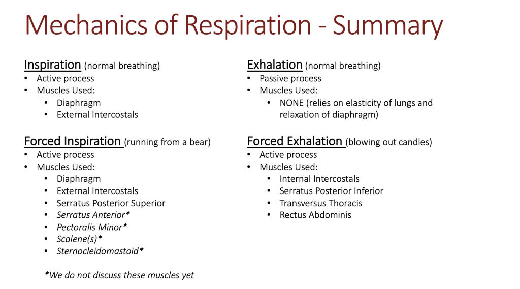 This image is a table listing the muscles involved in normal breathing, both inhalation and exhalation, as well as forced inspiration and exhalation.