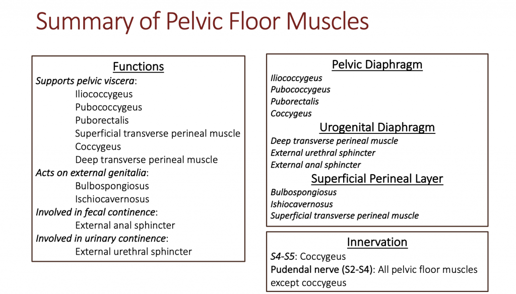 The image is a table outlining the functions of the different pelvic floor muscles. The three layers to the pelvic floor are outlined with their contents on the right side of the image.