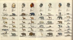 chart featuring so-called human types aligned with animal types