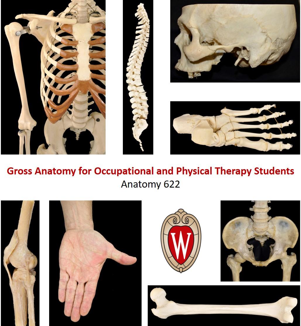 Anatomy 622 Coursebook – Open Textbook
