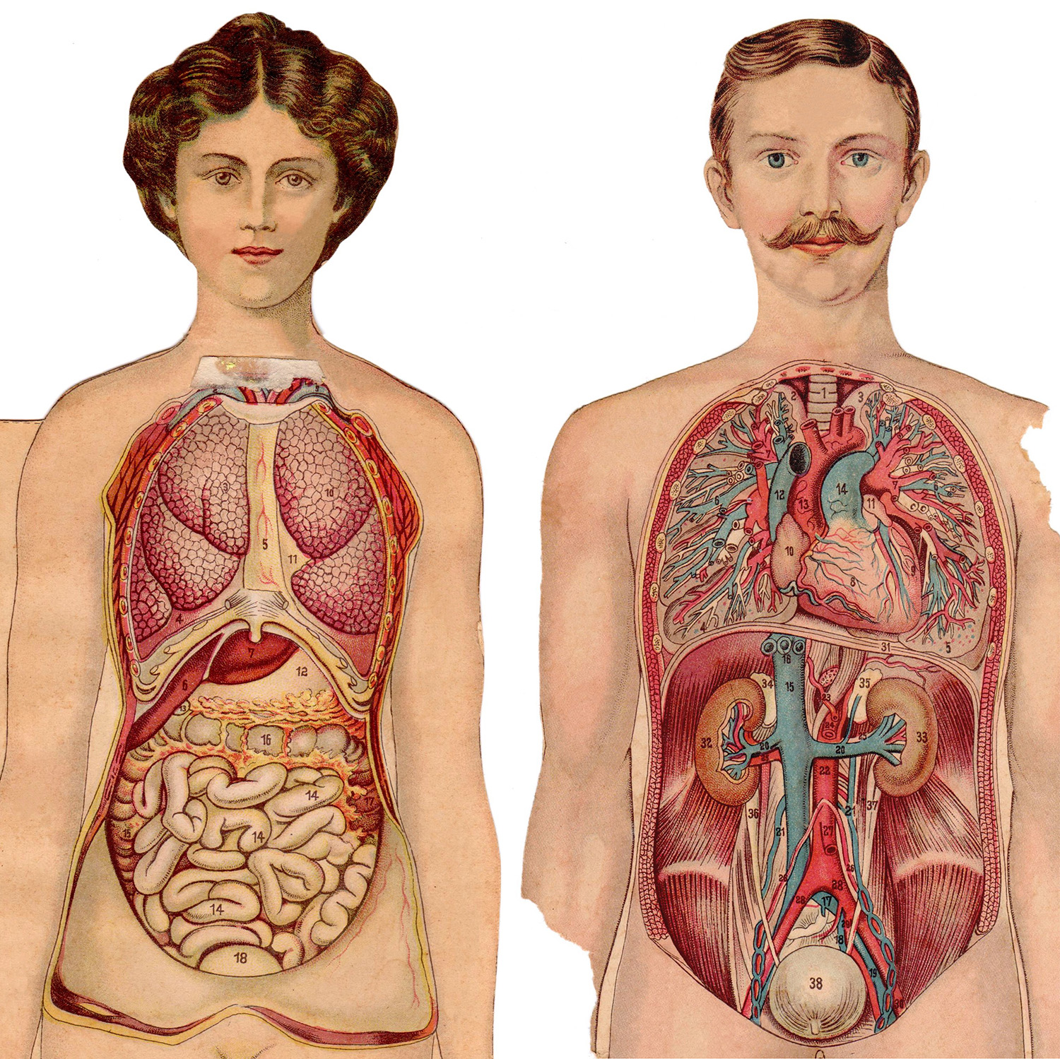 Human Anatomy For Physician Assistant Students Unit 2 Abdomen